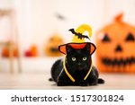 Stock photo black cat in halloween hat lying on the floor 1517301824
