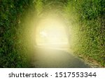 Green Tunnel Of Trees. Road...