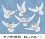 Realistic Doves. White Freedom...