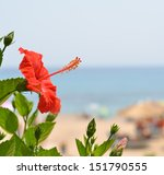 Beautiful Hibiscus flower against sea side - stock photo