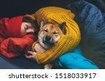 Sleeping Girl Hug Resting Dog...