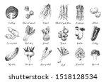 hand drawn vegetables... | Shutterstock .eps vector #1518128534