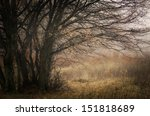 autumn morning landscape with...