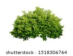 Tropical Plant Flower Bush Tre...