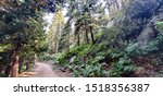 Small photo of Photo of a remote tree covered path in the Greenhorn Mountains of the Sierra National Forest in Kern County, California