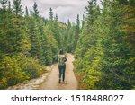 Hiker Travel Woman Walking On...