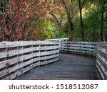 Fall Scene On Humbug Willow...