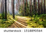 Forest trail in deep woodland with sunlight shadow