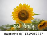 Good Morning Greeting Text Wit...