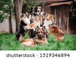 Group Of Dogs Together. Six...