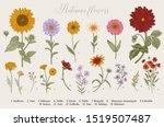 vintage vector botanical... | Shutterstock .eps vector #1519507487