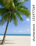 tropical sandy beach by the... | Shutterstock . vector #151977269