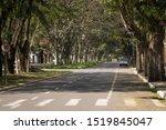 Covered and tree lined street. Maringa, Paraná, Brazil.