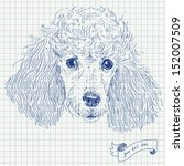 poodle head in vector  sketched ... | Shutterstock .eps vector #152007509