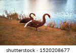 Two Black Swans On The Lake....