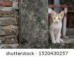 Stock photo cute little red kitten playing outdoor portrait of red kitten in ruin looking interesting tabby 1520430257