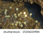 Treasure With Golden Coins By...