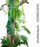Jungle Tree Trunk With Tropica...