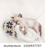 Stock photo kitten sleep on plaid near home slippers little cut cat at home 1520937737