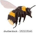 bumble bee in flight  vector... | Shutterstock .eps vector #152115161