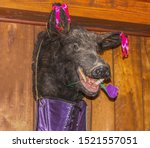 Small photo of Party Pig....Mangy looking stuffed boars head hangs on panelled wall with corset underneath and flower in mouth and bows on ears