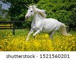 A Unicorn Canters Through A...