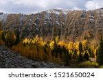 Golden Larch forest in autumn. Canadian Rockies. Ptarmigan Cirque hiking trail near Kananaskis Village. Alberta. Canada.