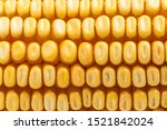 corn on a white background   Shutterstock . vector #1521842024