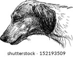 head of  dachshund | Shutterstock .eps vector #152193509