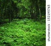 jungle rainforest background.... | Shutterstock . vector #152195765