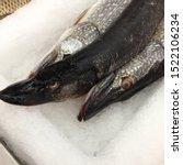 Macro Photo Fresh Pike Fish....