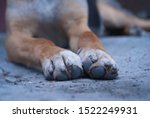 Paws Of A Street Dog