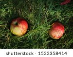 Closeup Of Red Apples On Green...