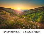 Serene Flower Field Landscape...