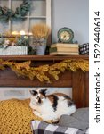 Calico Cat Blends Right In With ...