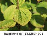 Green Nature Plant Leaf Garde...