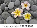 Three Frangipani And Gray Stones