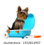 Adorable Yorkshire Terrier In...