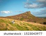 Sheep on grassy hillside at...