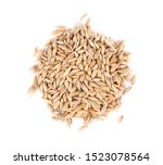 Malted barley grains  isolated...