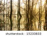 Trees with reflection in a swamp - stock photo
