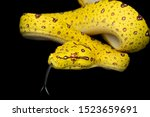 Colorful Green Tree Python Snake