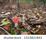 Red Poisonous Mushroom   Fly...