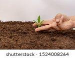 hand of scissors pose with... | Shutterstock . vector #1524008264