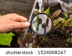 a hand holds a magnifier and... | Shutterstock . vector #1524008267