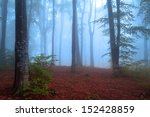 first autumn days in the forest ... | Shutterstock . vector #152428859