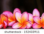 flowers | Shutterstock . vector #152433911
