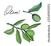 vector olive branch with fruit. ... | Shutterstock .eps vector #1524593351