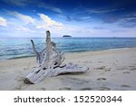 Drift Wood On Sandy Beach At...