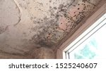 Small photo of Mold growth. Damp walls, ceiling, window frames and glass in home. Molds thrive on moisture and reproduce by means of tiny, lightweight spores that travel through the air